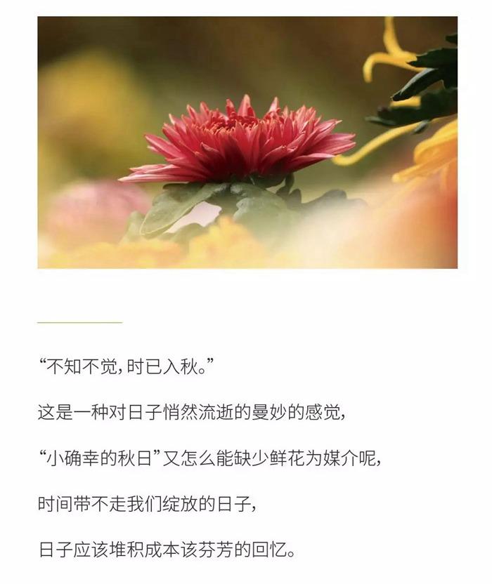 【艺展中心】秋阳万里,不如鲜花集市有你