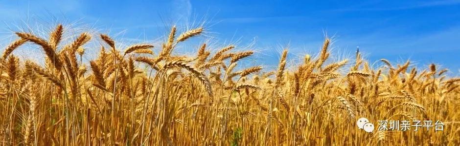 秋游定制 | 金九银十丰收季,相约郊游研学趣,空气中都充满着稻香、玉米香、各种瓜果